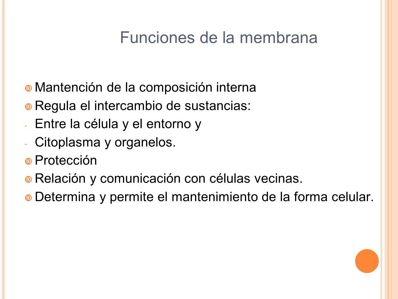 Funciones de la membrana Mantención de la composición interna Regula el intercambio de sustancias: - Entre la célula y el entorno y - Citoplasma y org