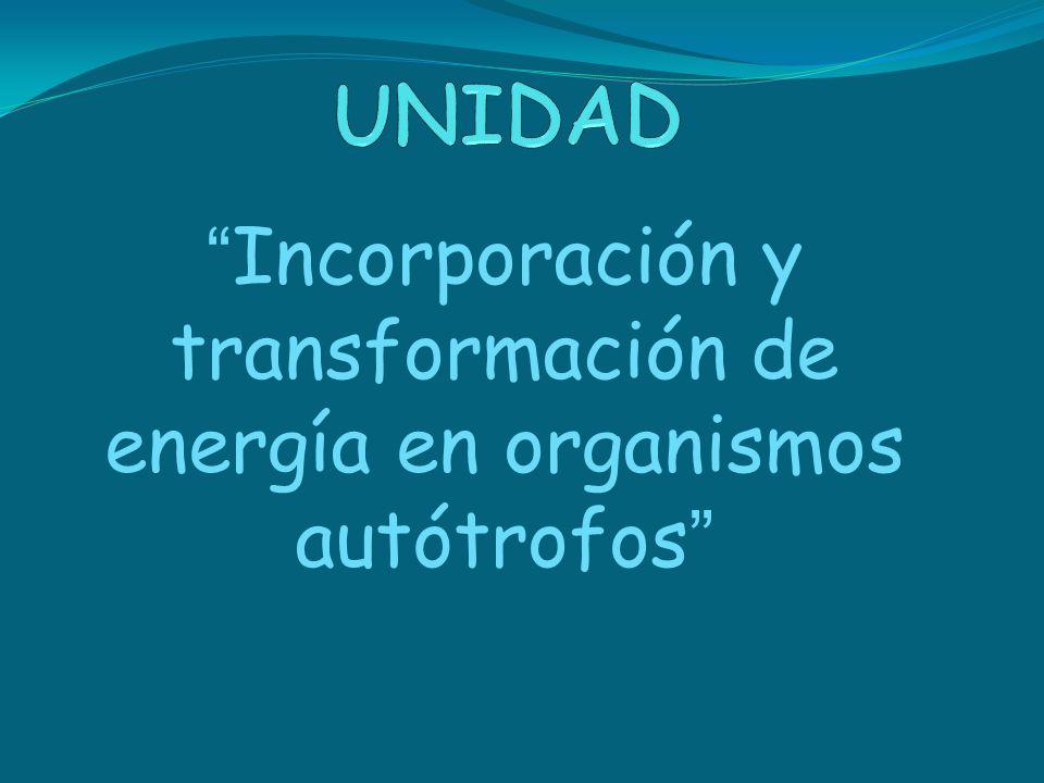 Incorporación y transformación de energía en organismos autótrofos