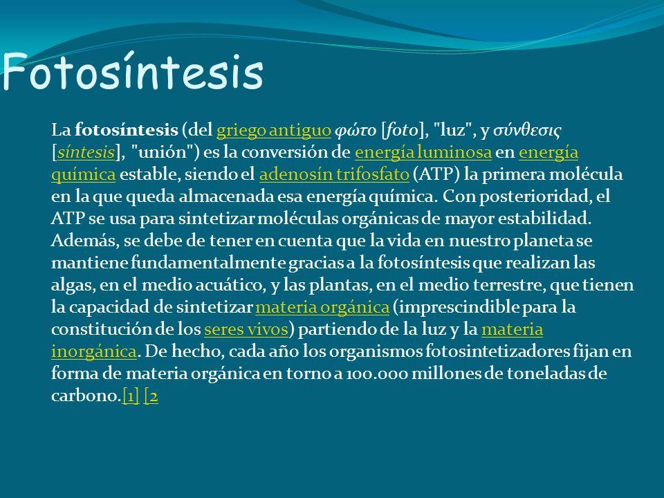 Fotosíntesis La fotosíntesis (del griego antiguo φώτο [foto],