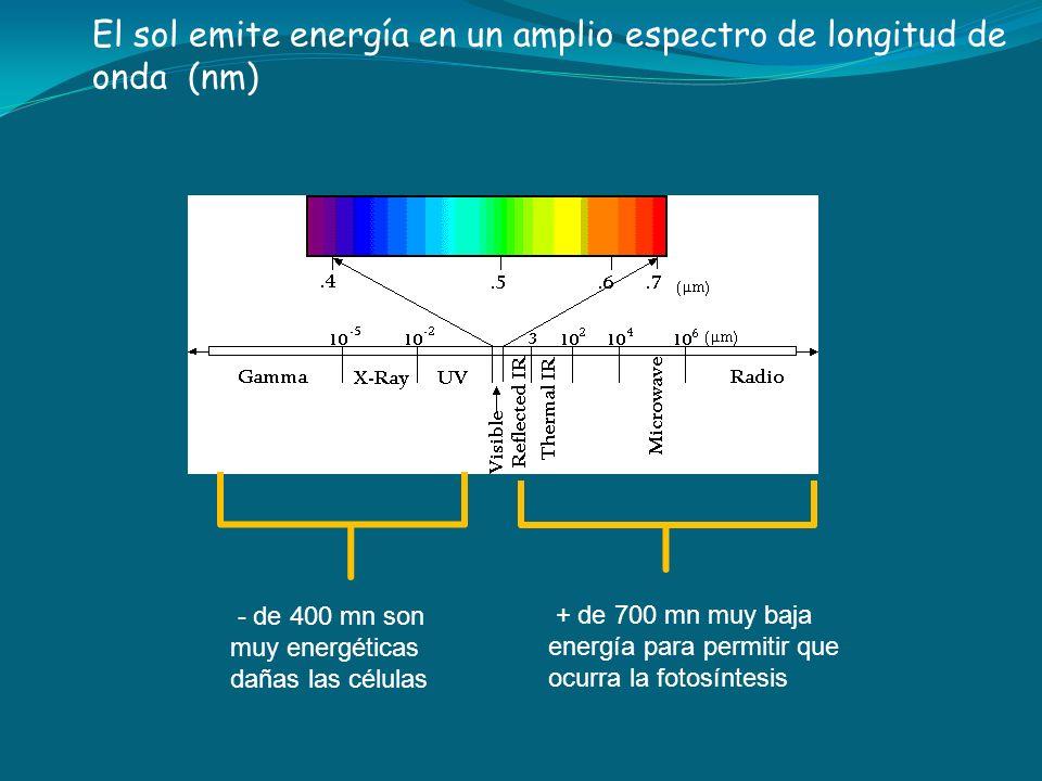 El sol emite energía en un amplio espectro de longitud de onda (nm) - de 400 mn son muy energéticas dañas las células + de 700 mn muy baja energía par