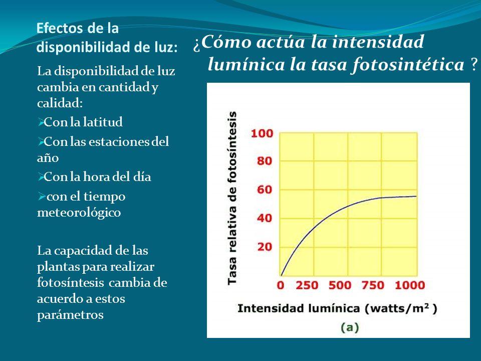 Efectos de la disponibilidad de luz: La disponibilidad de luz cambia en cantidad y calidad: Con la latitud Con las estaciones del año Con la hora del