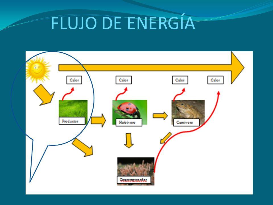 FLUJO DE ENERGÍA