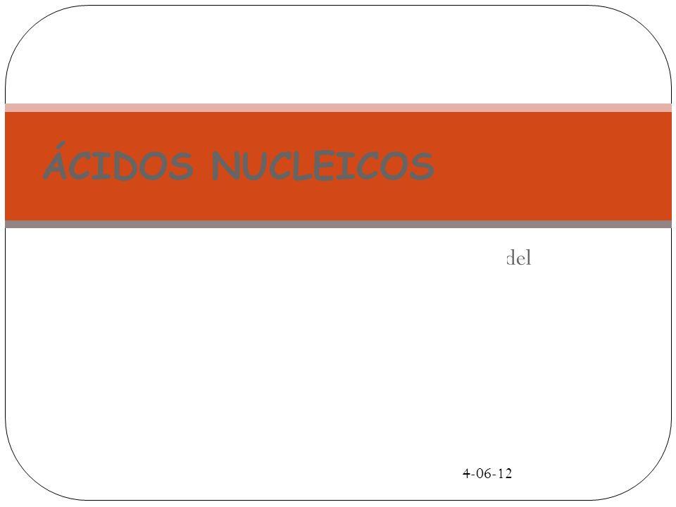4-06-12 Ácidos Nucleicos Macromoléculas formadas por la unión de nucleótidos.