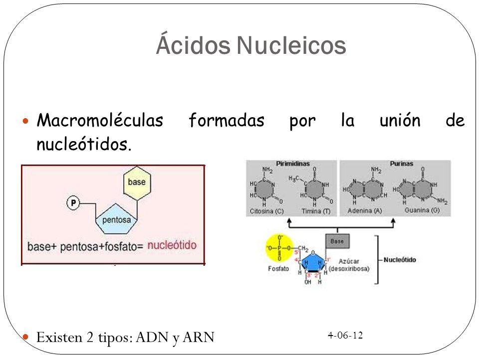 4-06-12 Ácidos Nucleicos Macromoléculas formadas por la unión de nucleótidos. Existen 2 tipos: ADN y ARN