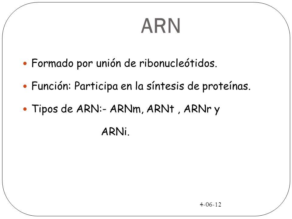 4-06-12 ARN Formado por unión de ribonucleótidos. Función: Participa en la síntesis de proteínas. Tipos de ARN:- ARNm, ARNt, ARNr y ARNi.