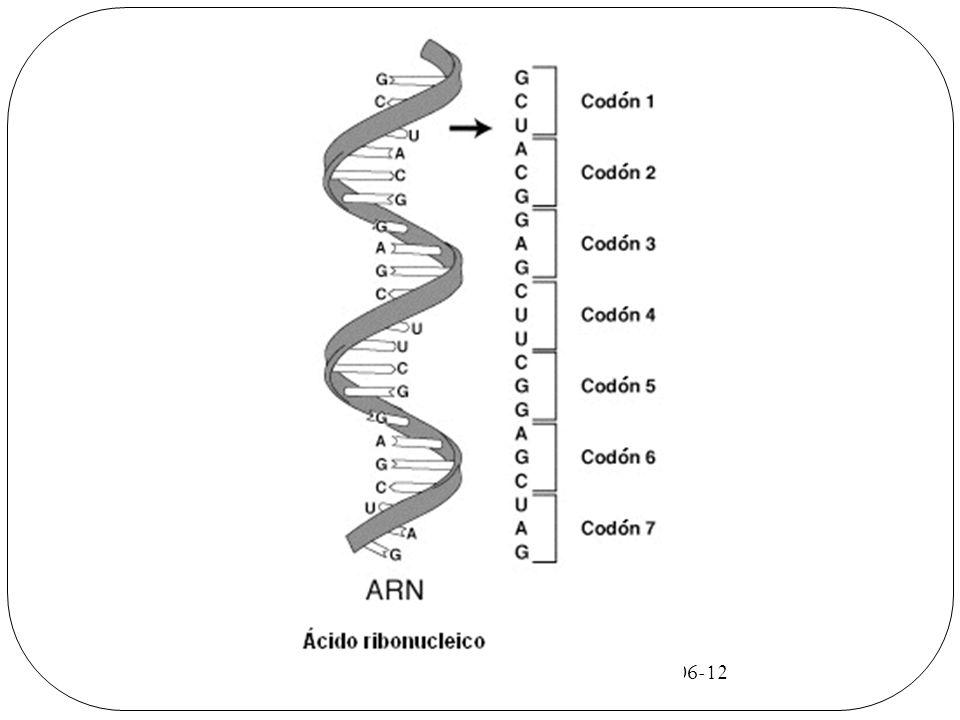 ADN Formado por la unión de desoxirribonucleótidos.