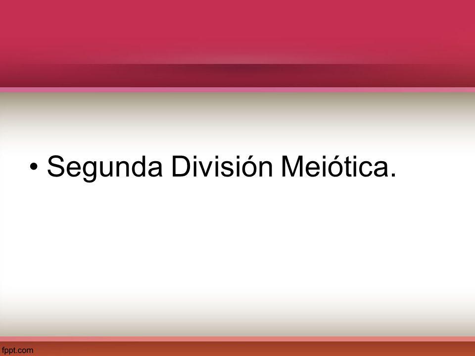 Segunda División Meiótica.