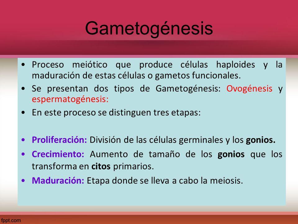 Proceso meiótico que produce células haploides y la maduración de estas células o gametos funcionales. Se presentan dos tipos de Gametogénesis: Ovogén