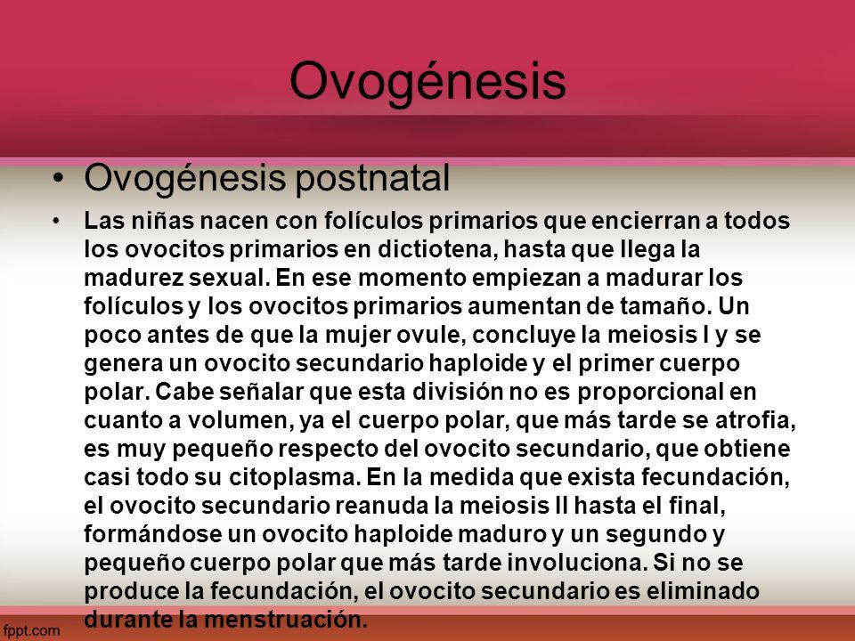 Ovogénesis Ovogénesis postnatal Las niñas nacen con folículos primarios que encierran a todos los ovocitos primarios en dictiotena, hasta que llega la