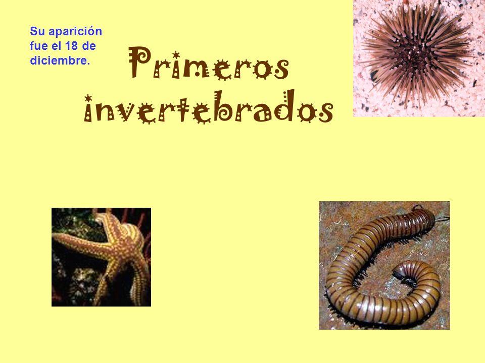 Primeros invertebrados Su aparición fue el 18 de diciembre.
