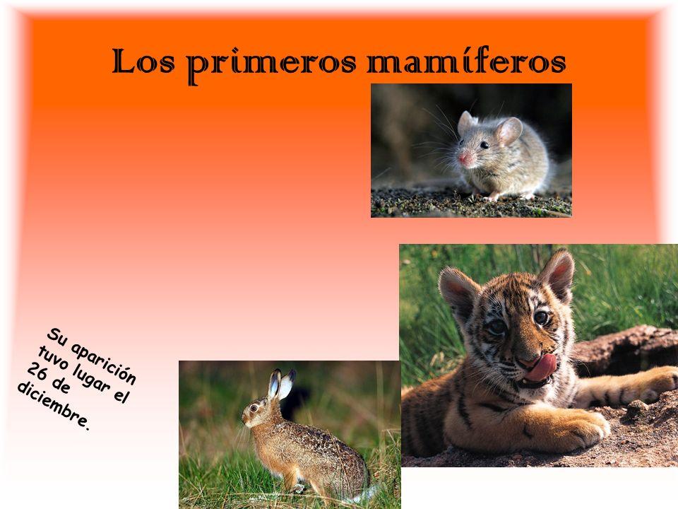 Los primeros mamíferos S u a p a r i c i ó n t u v o l u g a r e l 2 6 d e d i c i e m b r e.