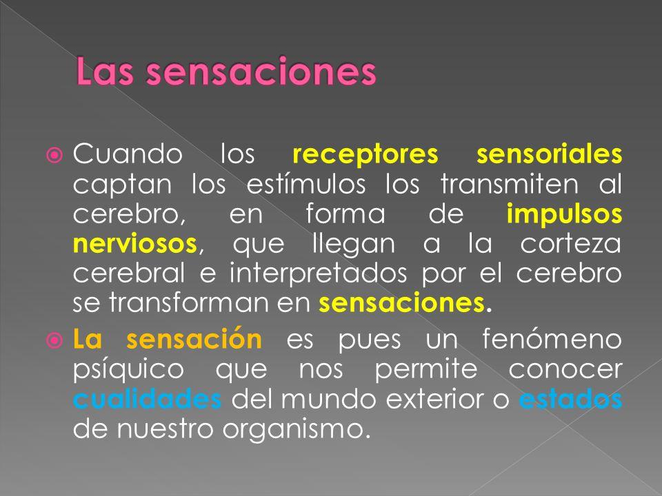 Cuando los receptores sensoriales captan los estímulos los transmiten al cerebro, en forma de impulsos nerviosos, que llegan a la corteza cerebral e i