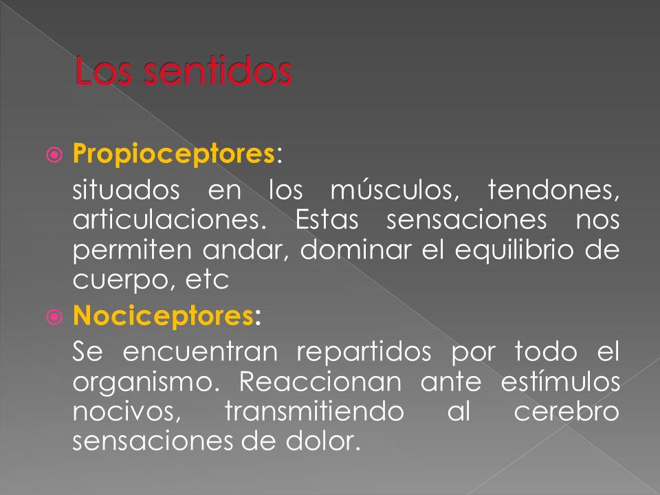 Propioceptores : situados en los músculos, tendones, articulaciones. Estas sensaciones nos permiten andar, dominar el equilibrio de cuerpo, etc Nocice