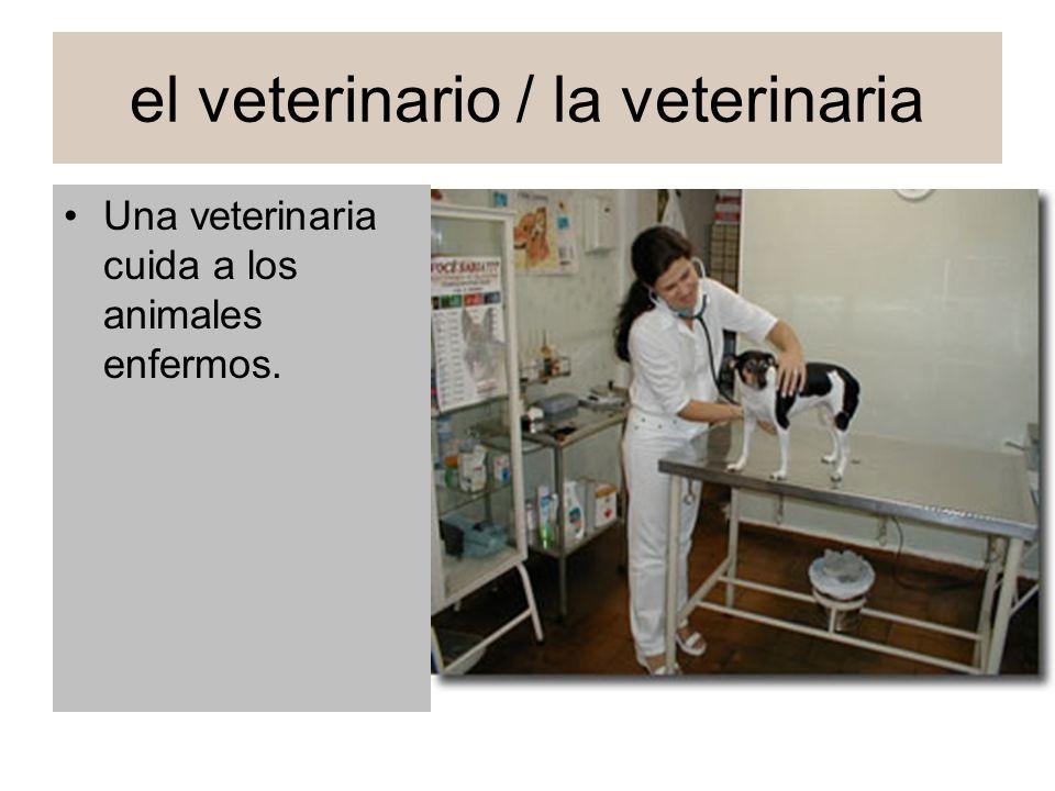 el veterinario / la veterinaria Una veterinaria cuida a los animales enfermos.