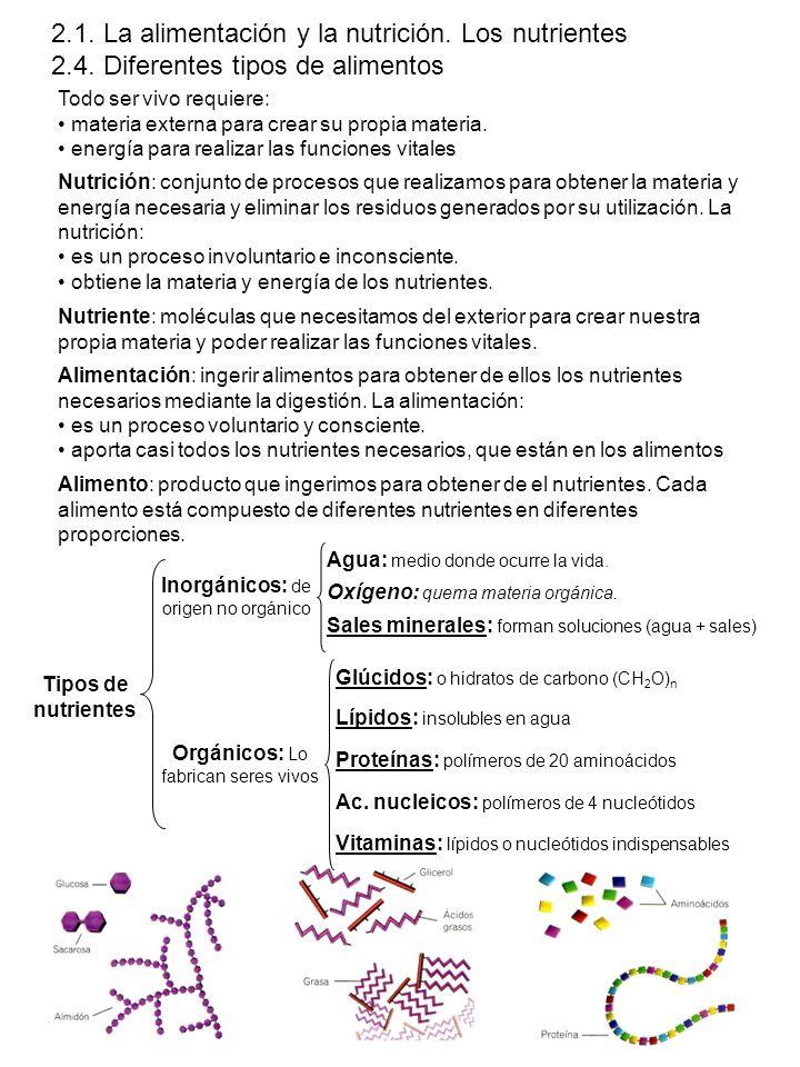 Nutrientes de los alimentos NutrienteejemplosFuenteFunción GlúcidoGlucosa, sacarosa, almidón, glucógeno y celulosa.