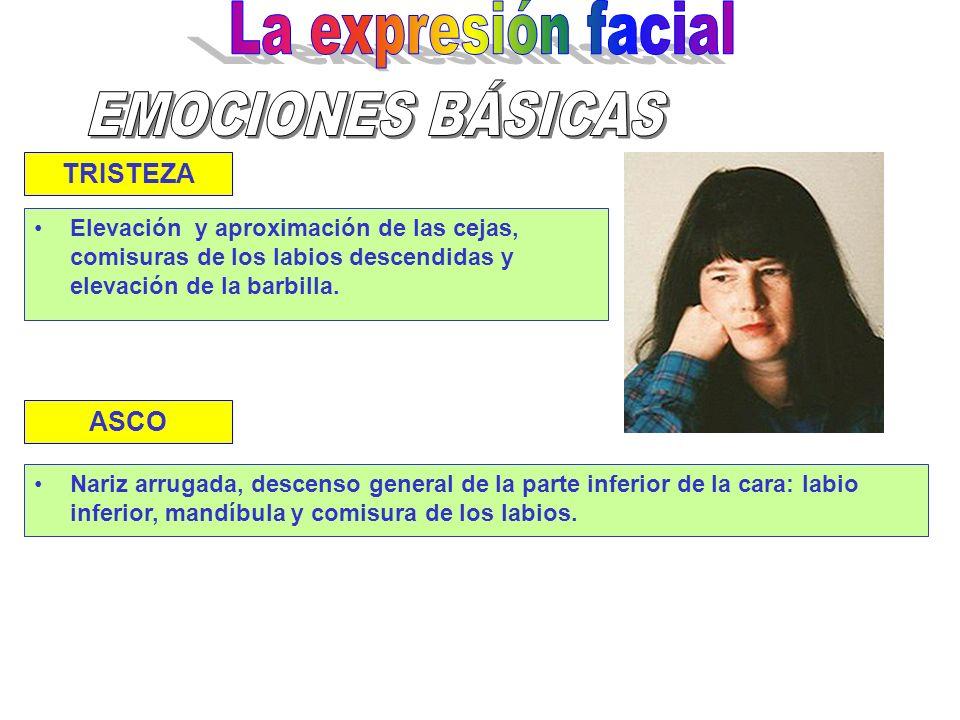 MIEDO Elevación y aproximación de las cejas. Ojos y boca abiertos,alargamiento de las comisuras de los labios SORPRESA Similar a la de miedo, pero sin