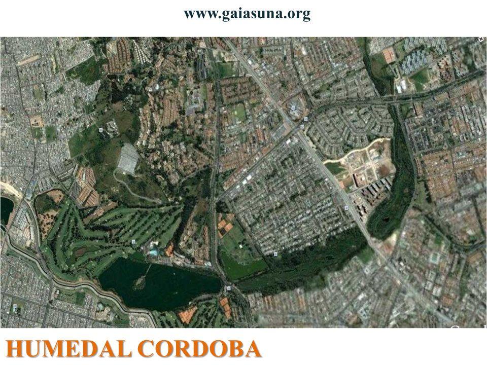 HUMEDAL CORDOBA www.gaiasuna.org