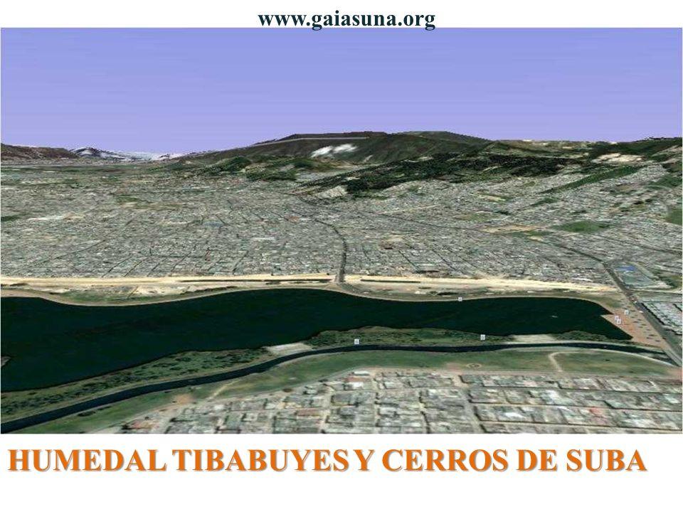 HUMEDAL TIBABUYES Y CERROS DE SUBA www.gaiasuna.org