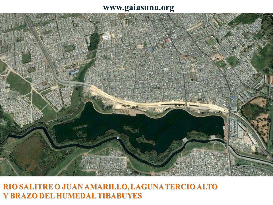 RIO SALITRE O JUAN AMARILLO, LAGUNA TERCIO ALTO Y BRAZO DEL HUMEDAL TIBABUYES www.gaiasuna.org