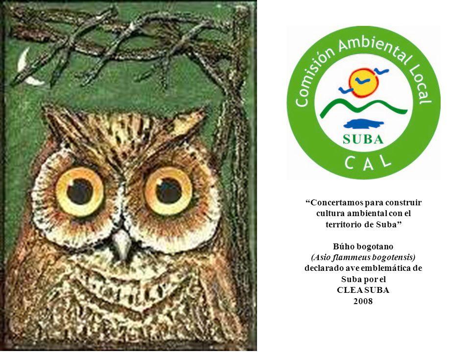 Concertamos para construir cultura ambiental con el territorio de Suba Búho bogotano (Asio flammeus bogotensis) declarado ave emblemática de Suba por