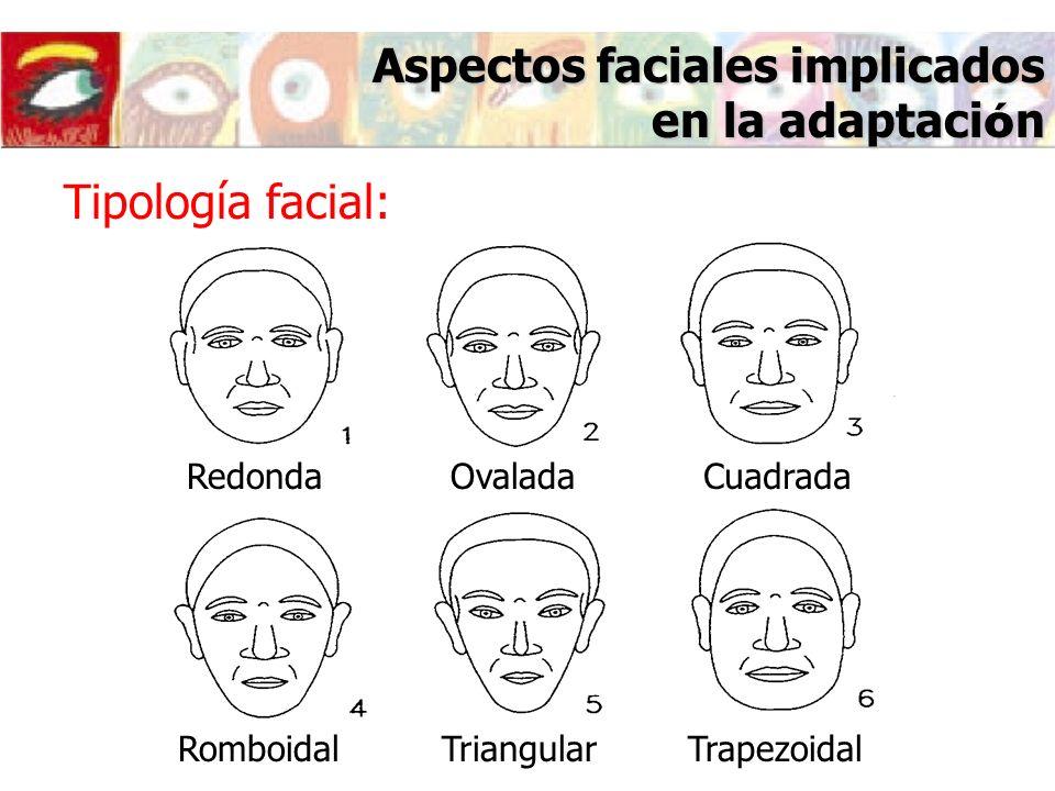 Aspectos faciales implicados en la adaptaci ó n Tipología facial: RedondaOvaladaCuadrada RomboidalTriangularTrapezoidal