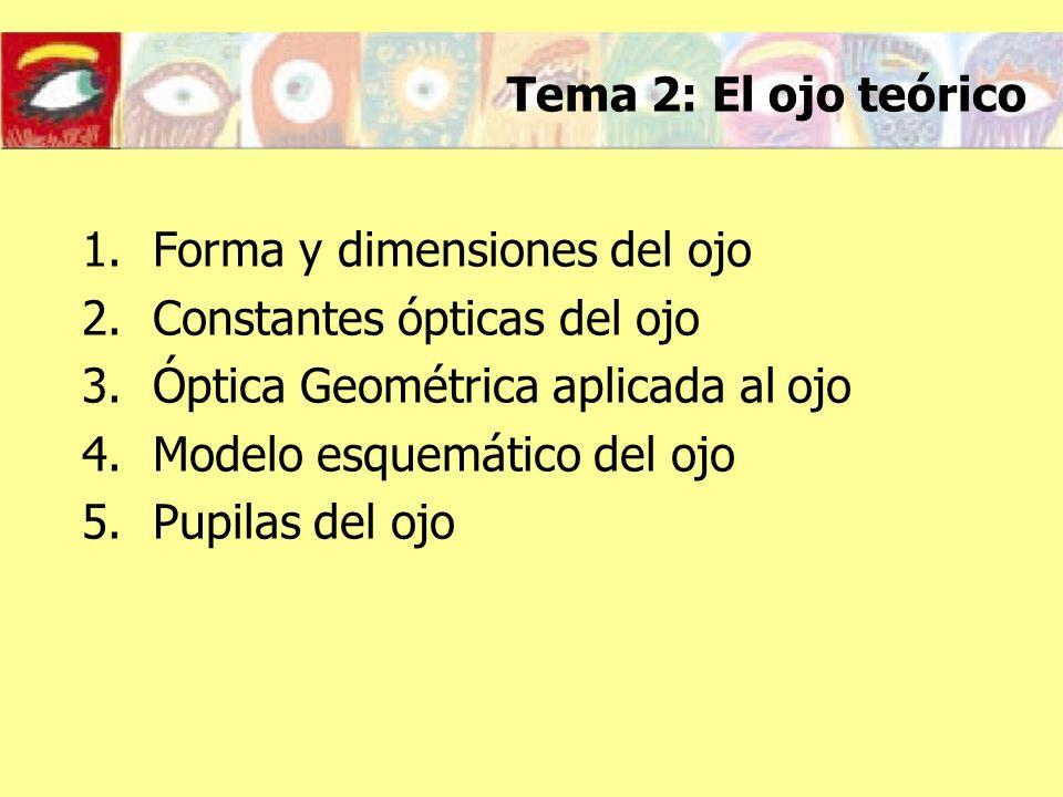 Tema 2: El ojo teórico 1.Forma y dimensiones del ojo 2.Constantes ópticas del ojo 3.Óptica Geométrica aplicada al ojo 4.Modelo esquemático del ojo 5.P
