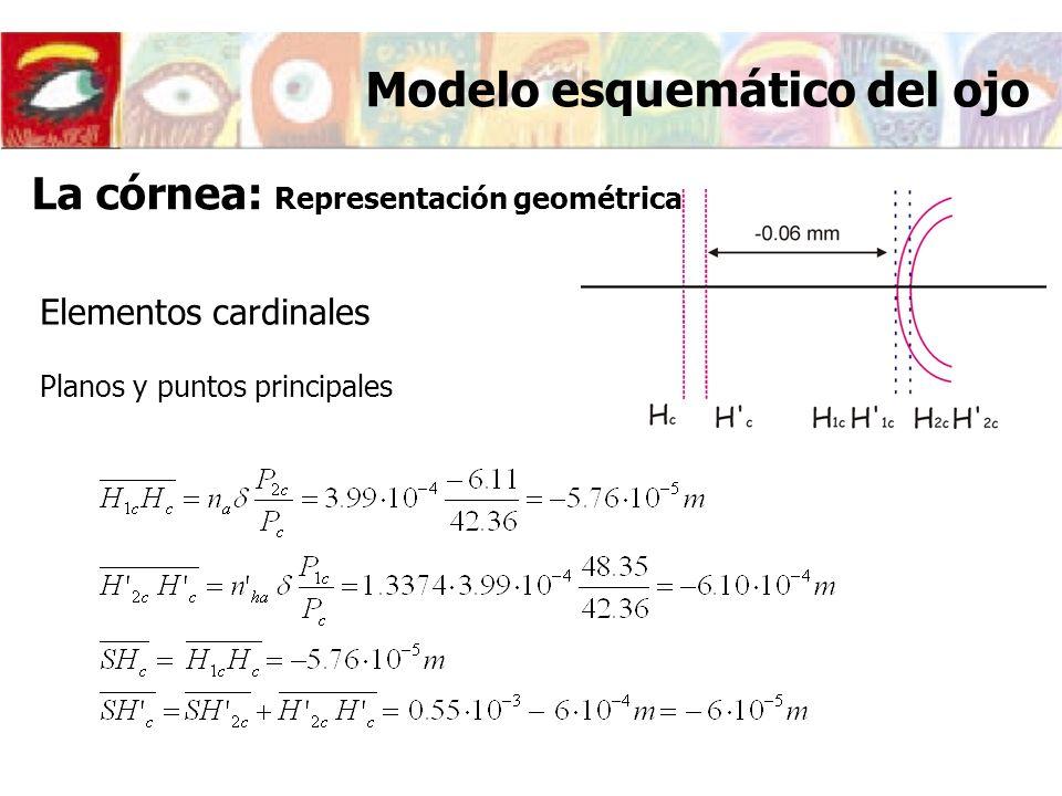 Elementos cardinales Planos y puntos principales Modelo esquemático del ojo La córnea: Representación geométrica