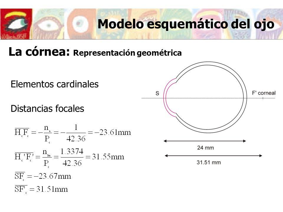 Elementos cardinales Distancias focales Modelo esquemático del ojo La córnea: Representación geométrica