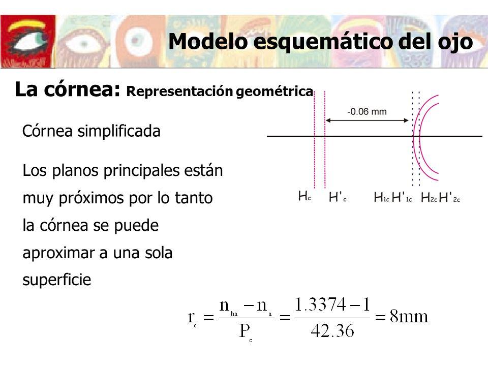 Córnea simplificada Los planos principales están muy próximos por lo tanto la córnea se puede aproximar a una sola superficie Modelo esquemático del o