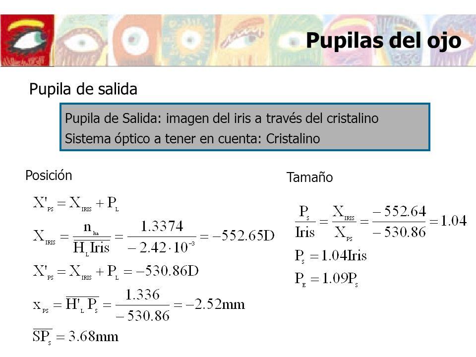 Pupilas del ojo Posición Pupila de salida Pupila de Salida: imagen del iris a través del cristalino Sistema óptico a tener en cuenta: Cristalino Tamañ