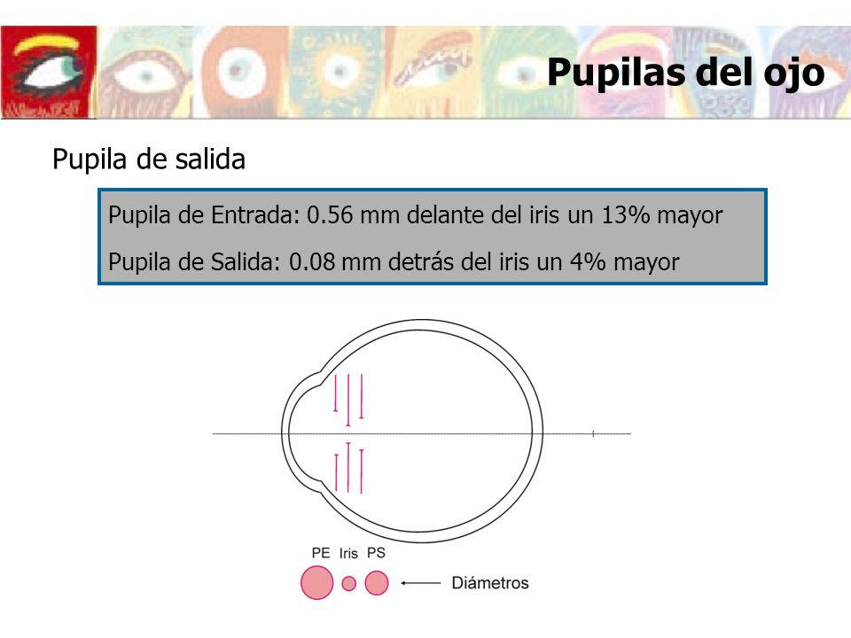 Pupilas del ojo Pupila de salida Pupila de Entrada: 0.56 mm delante del iris un 13% mayor Pupila de Salida: 0.08 mm detrás del iris un 4% mayor