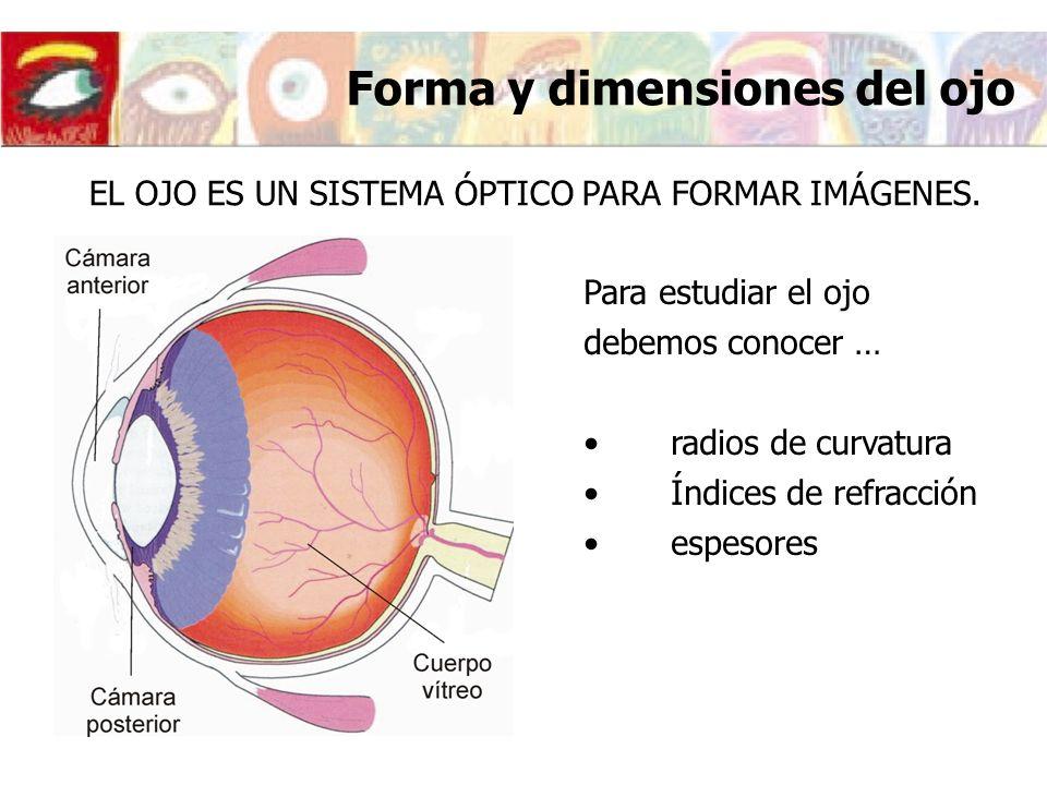 Forma y dimensiones del ojo EL OJO ES UN SISTEMA ÓPTICO PARA FORMAR IMÁGENES. Para estudiar el ojo debemos conocer … radios de curvatura Índices de re