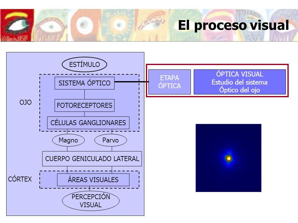 ÁREAS VISUALES ESTÍMULO SISTEMA ÓPTICO FOTORECEPTORES CÉLULAS GANGLIONARES OJO Magno Parvo CUERPO GENICULADO LATERAL PERCEPCIÓN VISUAL CÓRTEX ETAPA RETINIANA ETAPA CORTICAL ÁREAS VISUALES PSICOFÍSICA DE LA VISIÓN Respuesta del sistema visual a un estímulo físico PERCEPCIÓN VISUAL Codificación y procesado de la información