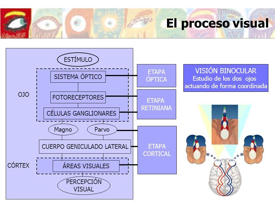 Importancia de la Óptica Fisiológica en la formación del óptico Óptica Fisiológica: Estudio del ojo como sistema óptico Modelos de ojo teórico Formación de la imagen retiniana Óptica de la acomodación y de la presbicia Óptica de las ametropías: Miopía, hipermetropía y astigmatismo