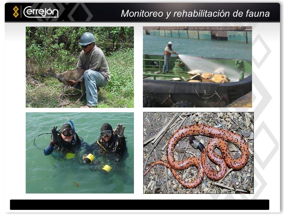 Un paso adelante Convenio con Conservation International: Aplicar experiencia Cerrejón en la lucha contra la desertificación y la conservación del bosque seco tropical, divulgación de experiencias.
