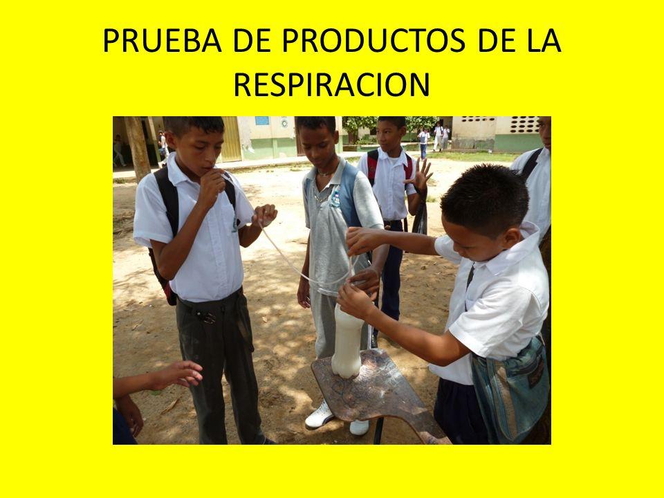 PRUEBA DE PRODUCTOS DE LA RESPIRACION
