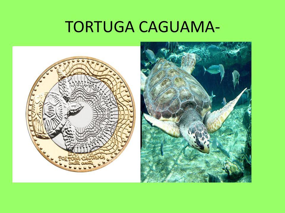 TORTUGA CAGUAMA-