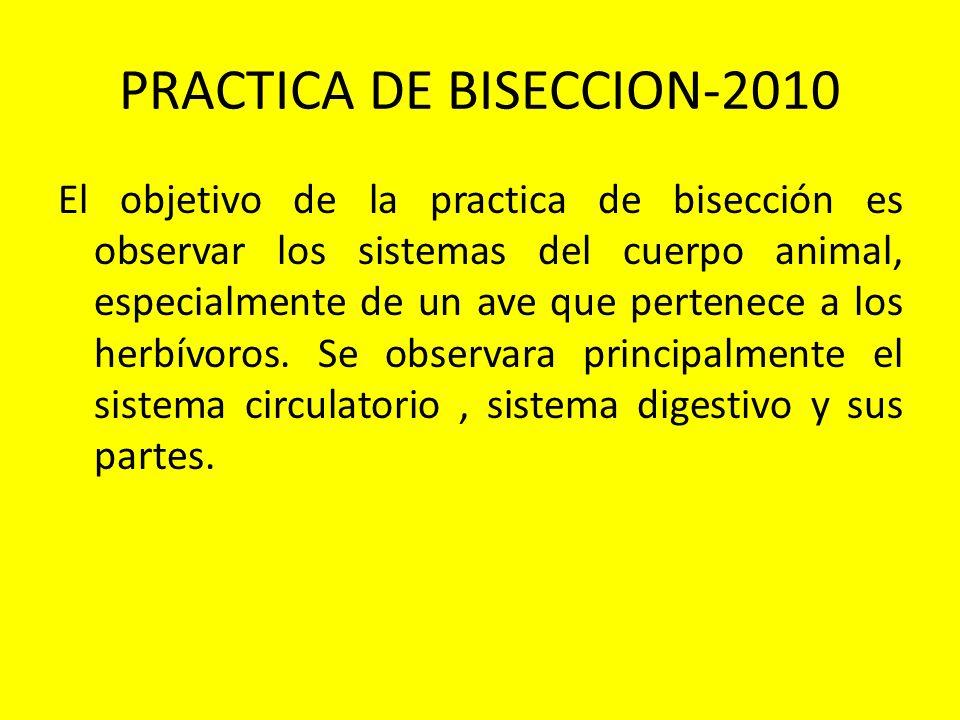 PRACTICA DE BISECCION-2010 El objetivo de la practica de bisección es observar los sistemas del cuerpo animal, especialmente de un ave que pertenece a