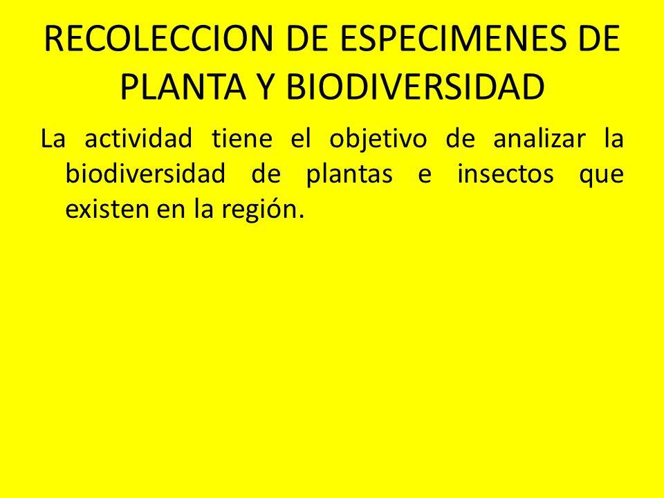 RECOLECCION DE ESPECIMENES DE PLANTA Y BIODIVERSIDAD La actividad tiene el objetivo de analizar la biodiversidad de plantas e insectos que existen en