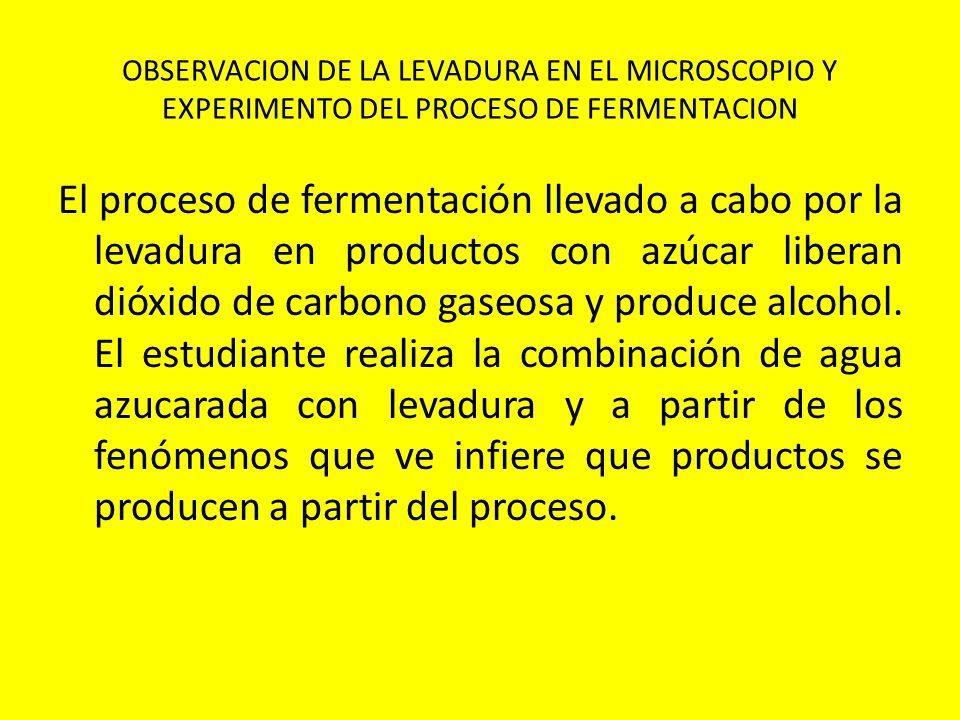 OBSERVACION DE LA LEVADURA EN EL MICROSCOPIO Y EXPERIMENTO DEL PROCESO DE FERMENTACION El proceso de fermentación llevado a cabo por la levadura en pr