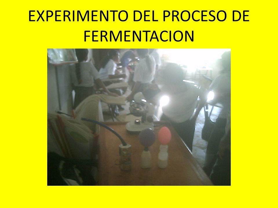 EXPERIMENTO DEL PROCESO DE FERMENTACION