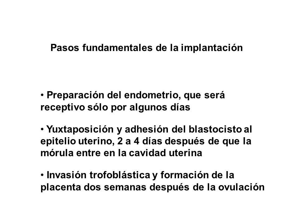 Pasos fundamentales de la implantación Preparación del endometrio, que será receptivo sólo por algunos días Yuxtaposición y adhesión del blastocisto a