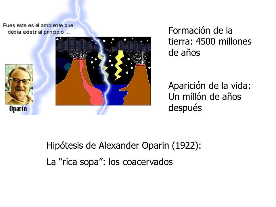 Formación de la tierra: 4500 millones de años Hipótesis de Alexander Oparin (1922): La rica sopa: los coacervados Aparición de la vida: Un millón de a