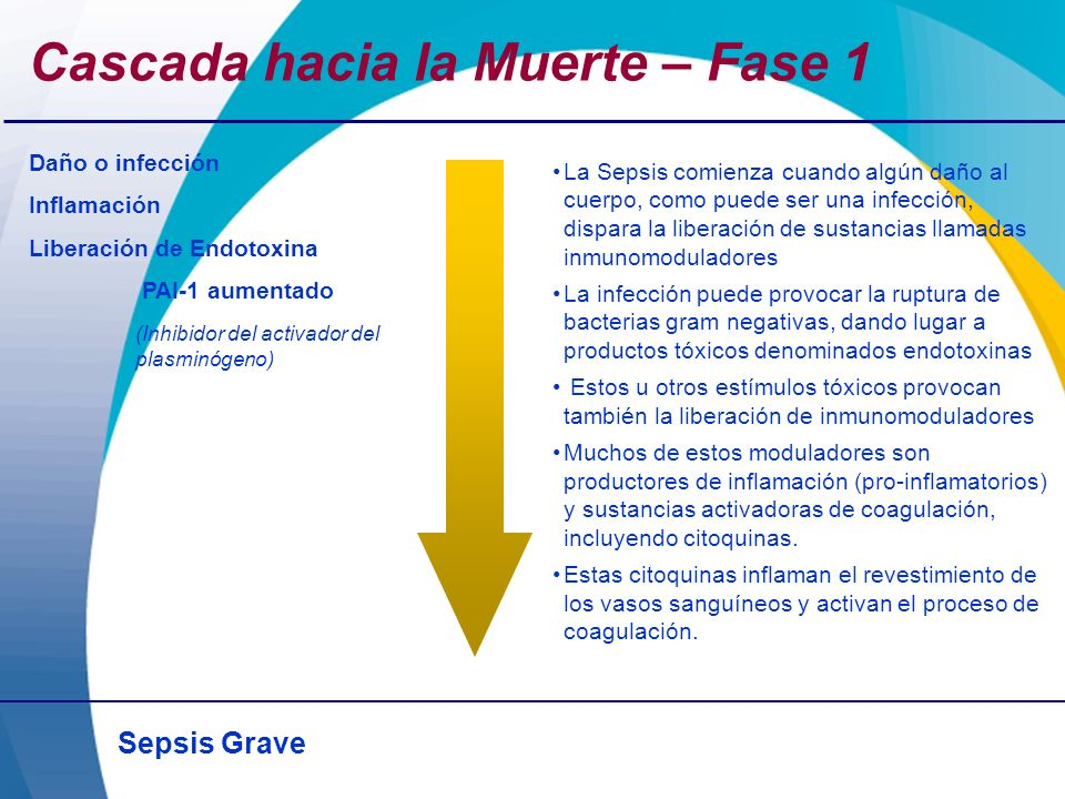 Sepsis Grave Cascada hacia la Muerte – Fase 1 Daño o infección Inflamación Liberación de Endotoxina PAI-1 aumentado (Inhibidor del activador del plasm