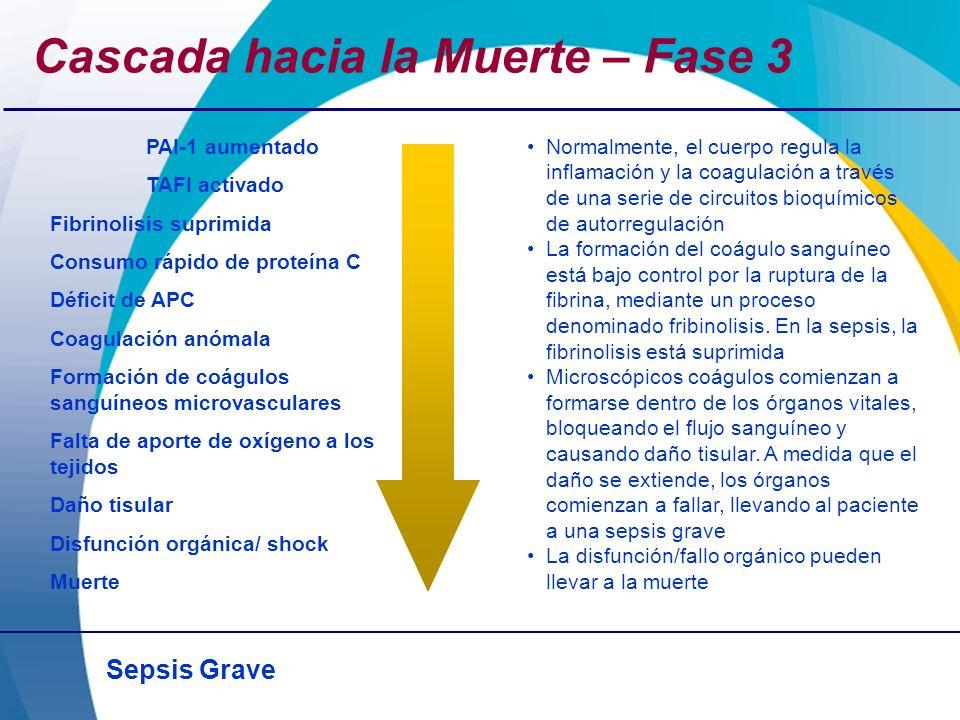 Sepsis Grave Cascada hacia la Muerte – Fase 3 PAI-1 aumentado TAFI activado Fibrinolisis suprimida Consumo rápido de proteína C Déficit de APC Coagula