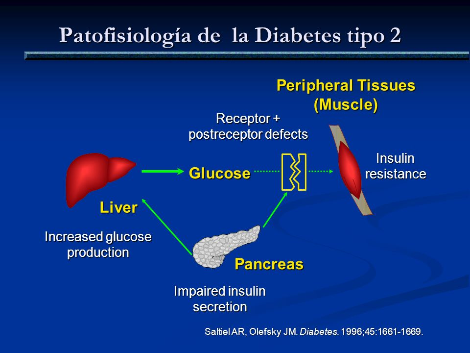 Patofisiología de la Diabetes tipo 2 Saltiel AR, Olefsky JM. Diabetes. 1996;45:1661-1669. Peripheral Tissues (Muscle) Glucose Liver Impaired insulin s