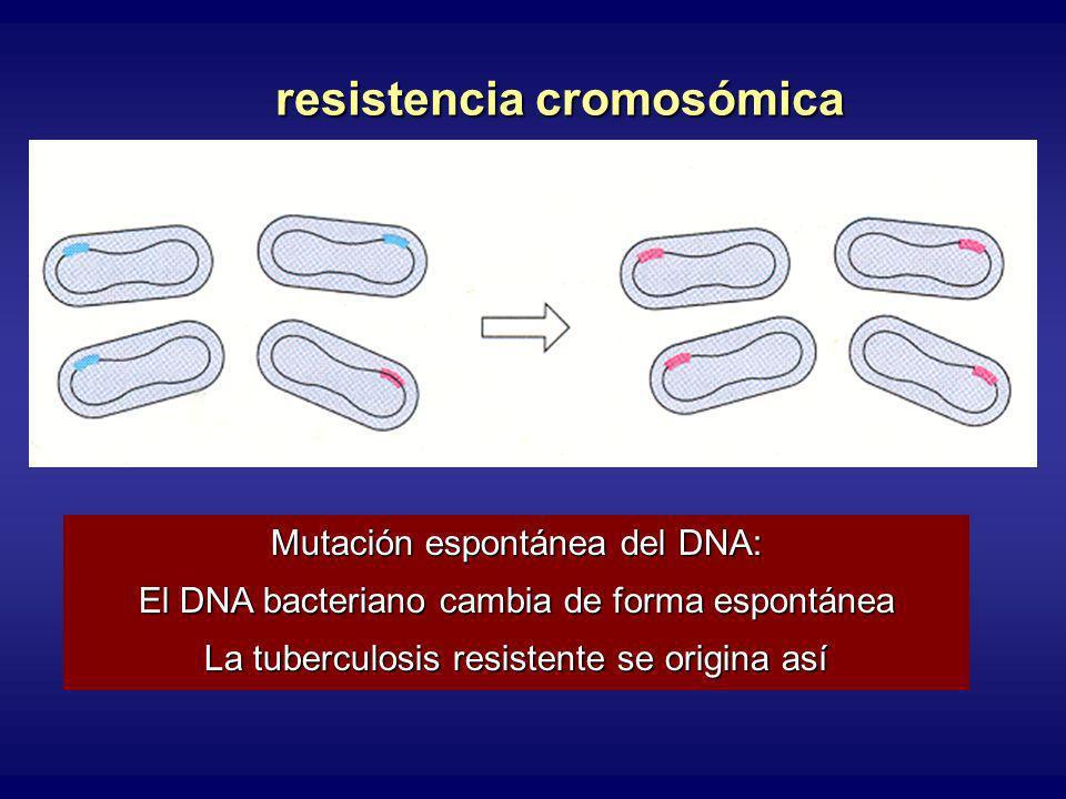resistencia cromosómica Mutación espontánea del DNA: El DNA bacteriano cambia de forma espontánea La tuberculosis resistente se origina así