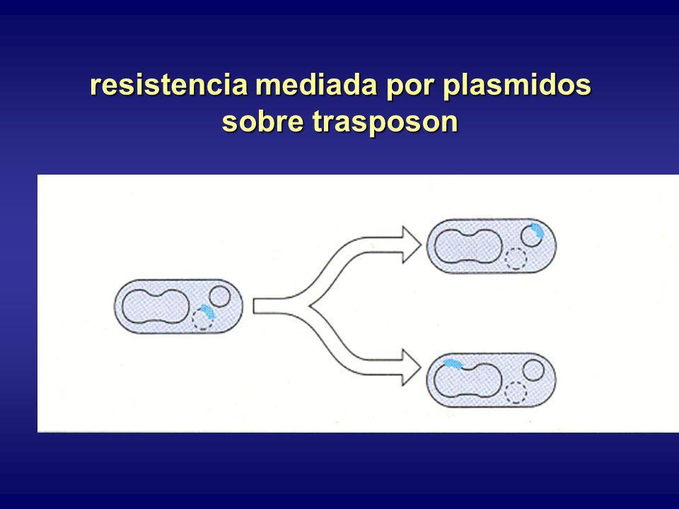 resistencia mediada por plasmidos sobre trasposon