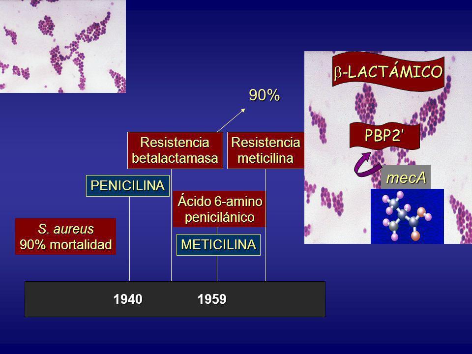 PENICILINA Resistenciabetalactamasa90% Ácido 6-amino penicilánicoMETICILINA Resistenciameticilina PBP2 -LACTÁMICO -LACTÁMICO mecA 19401959 S. aureus 9