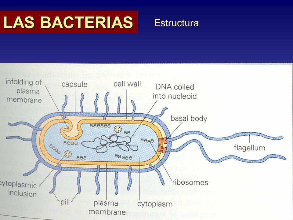 Cultivo Antimicrobianos LAS BACTERIAS